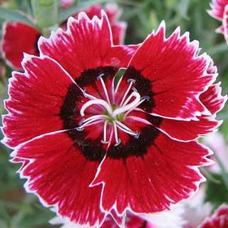 ý nghĩa về các loài hoa